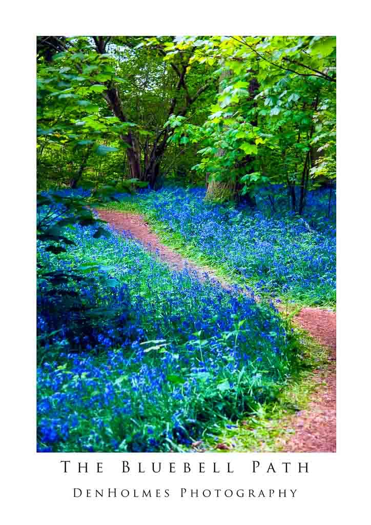 The Bluebell Path